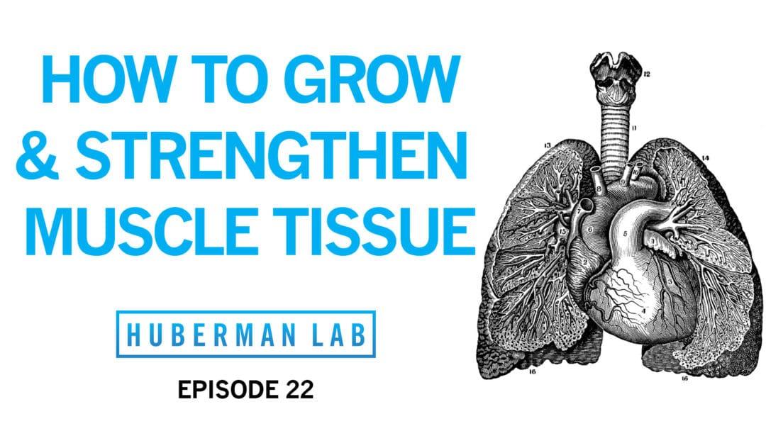 Huberman Lab Podcast Episode 22 Title Card