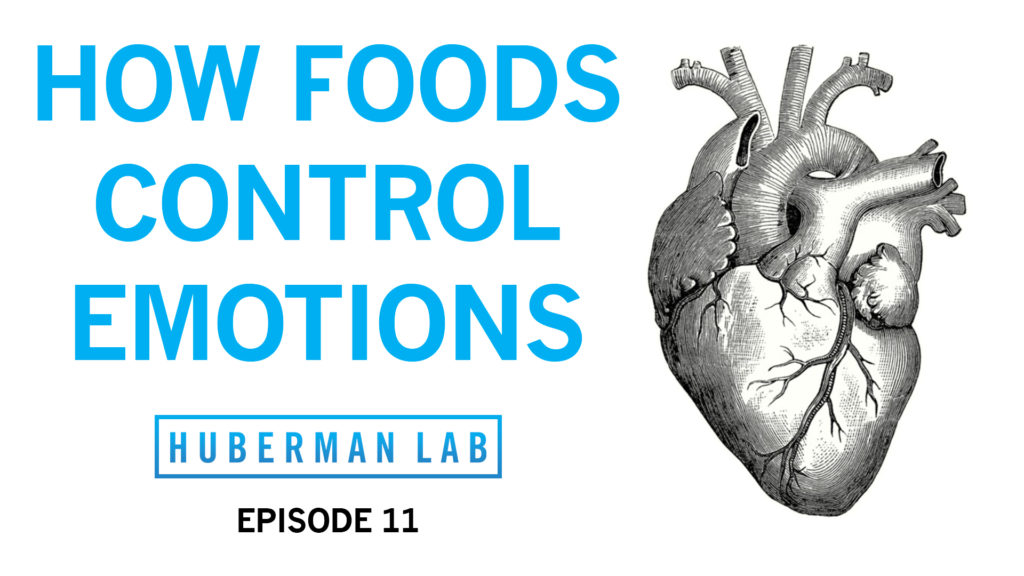 Huberman Lab Podcast Episode 11 Title Card