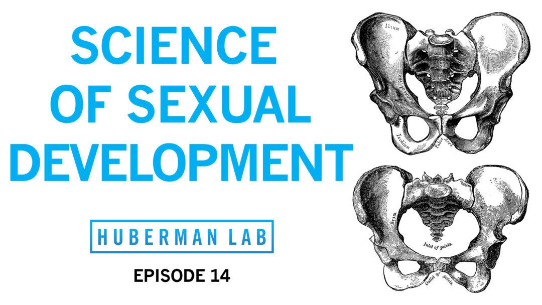 Huberman Lab Podcast Episode 14 Title Card