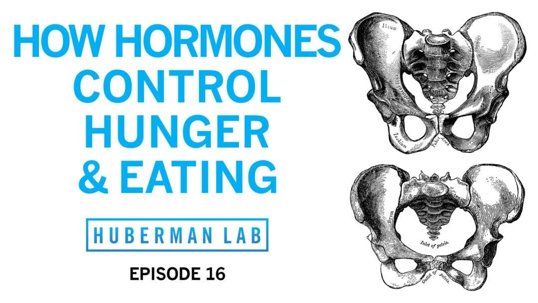 Huberman Lab Podcast Episode 16 Title Card