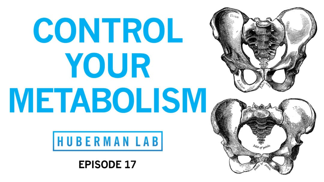 Huberman Lab Podcast Episode 17 Title Card