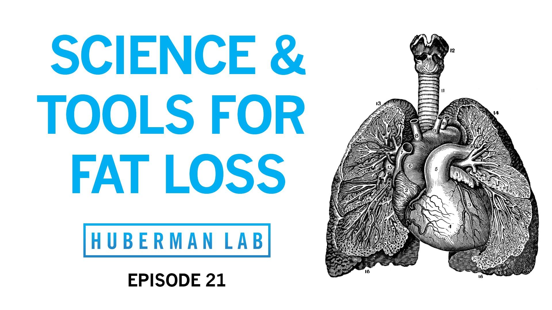 Huberman Lab Podcast Episode 21 Title Card