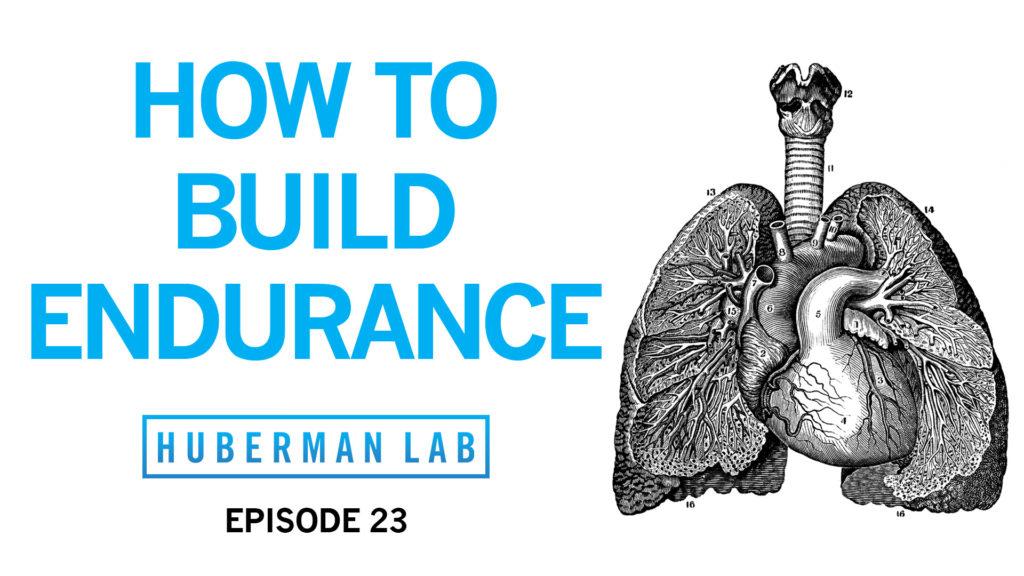 Huberman Lab Podcast Episode 23 Title Card